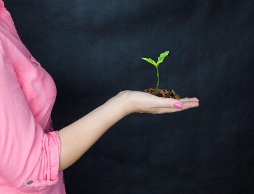 Masser af ny beplantning på Gyttegård